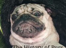 The history of Pugs