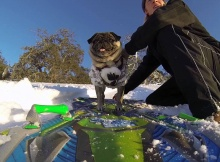 Brandy Pug Snowboarding