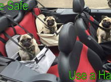 Pug car seats