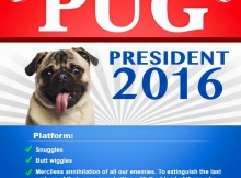 Pug for President