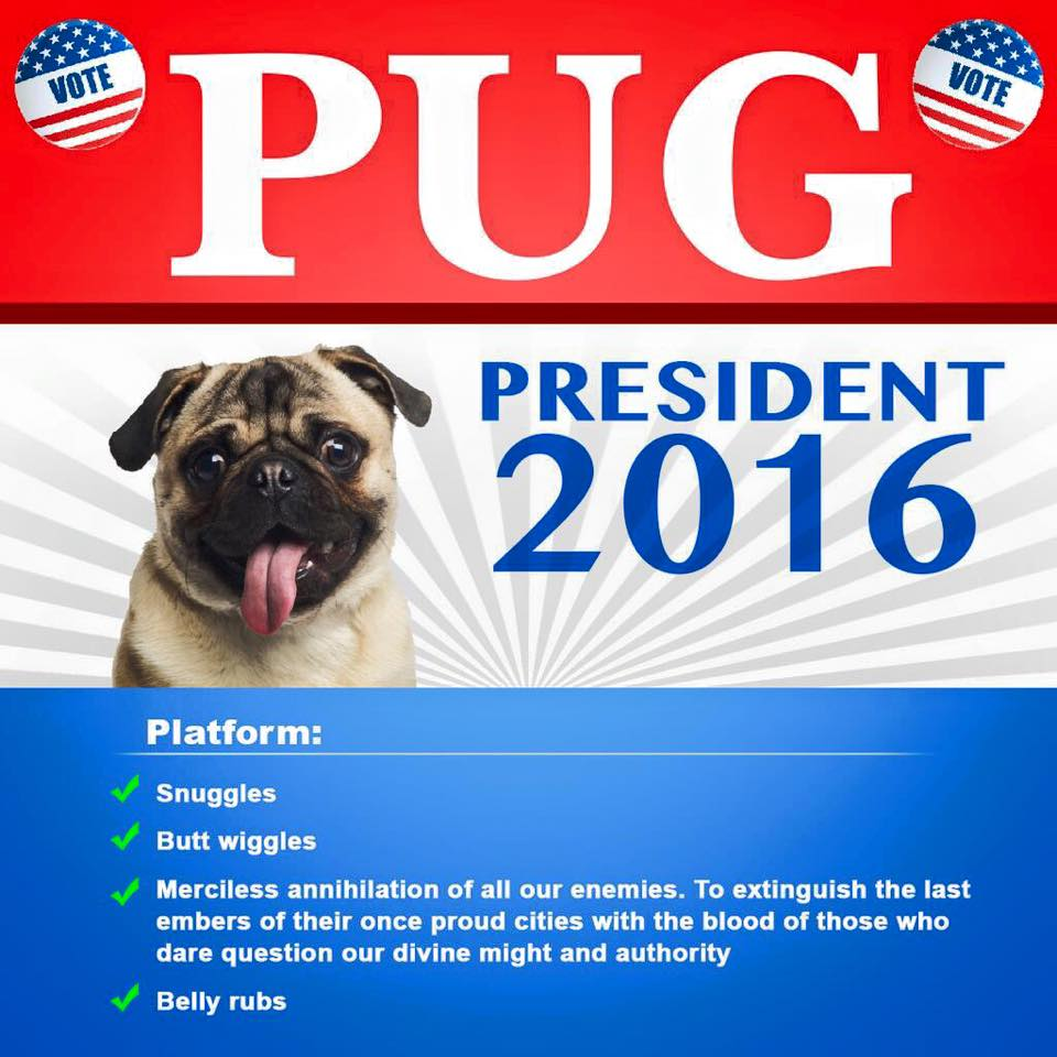 Which Pug For President Click To See Candidates The Channel