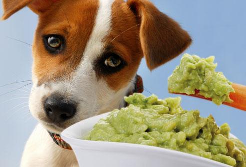 sad_dog_and_guacamole