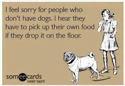Dangerous Food for Pugs
