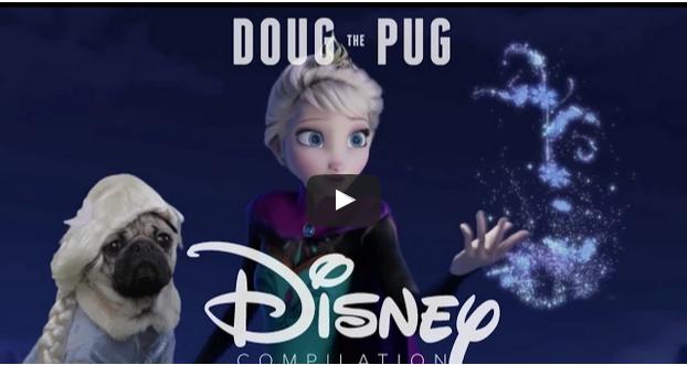 Pug does Disney