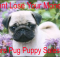 Pug puppy scams
