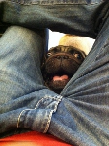 14. They enjoy sticking their heads between peoples' legs.