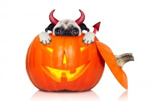 Best Choice of Halloween Pug Costumes Here!