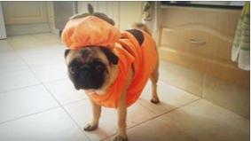 I'm pretending to be a Pumpkin. Don't call me Pumpkin head!